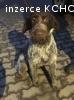 Prodám psa s PP